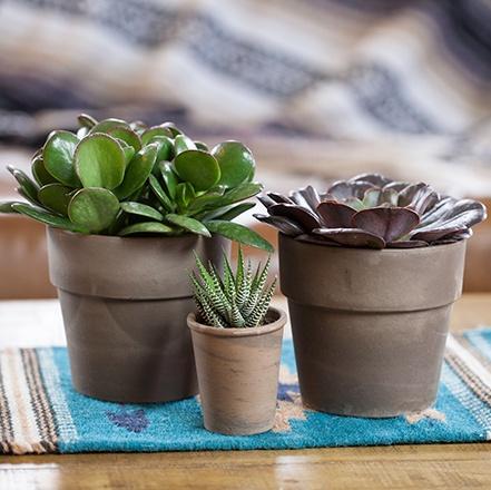 succulents-0424