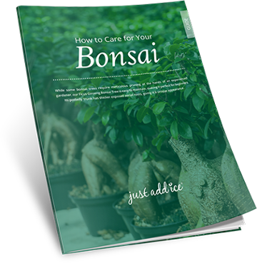 How to Care for Your Bonsai