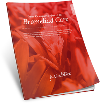 Your Complete Care Guide to Bromeliad Care
