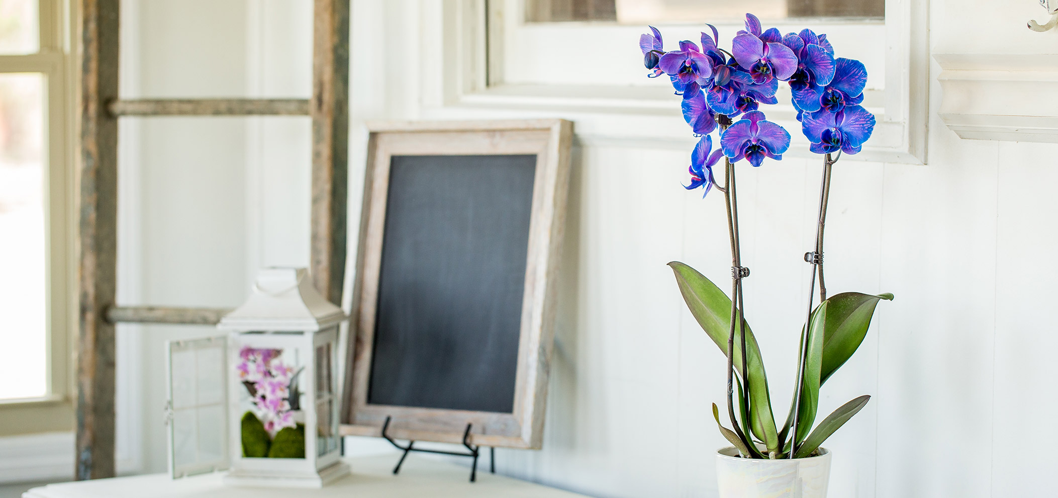 Orchid and Chalkboard