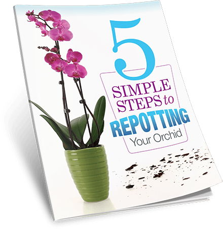 5 Simple Steps to Repotting Your Orchid