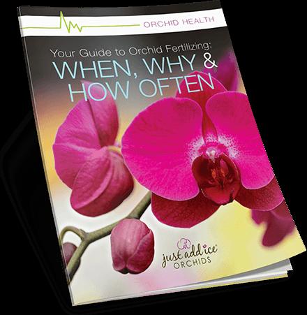 Orchid Fertilizing Guide