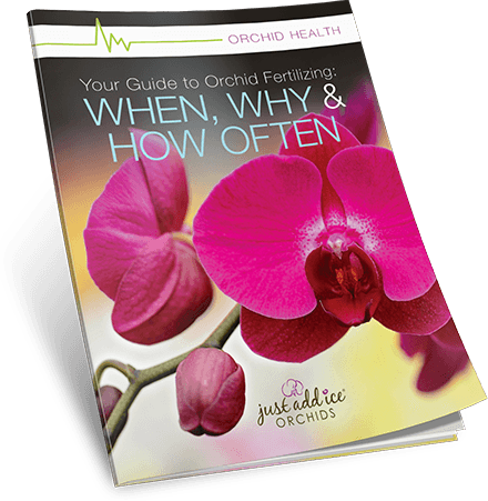 Orchid Fertilizing Guide
