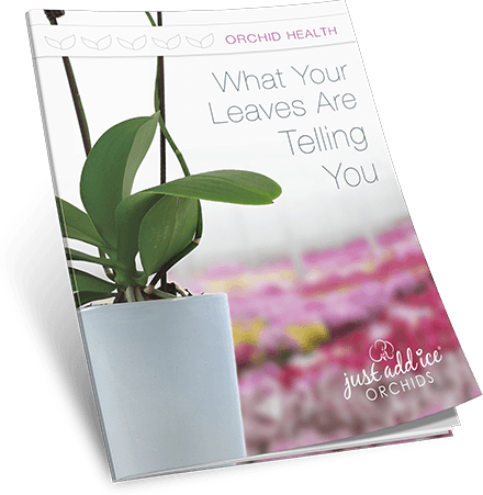 Orchid Leaf Guide