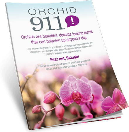Orchid 911 Guide