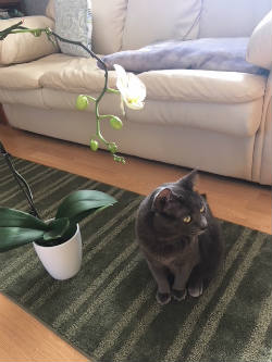 pet-safe-houseplants