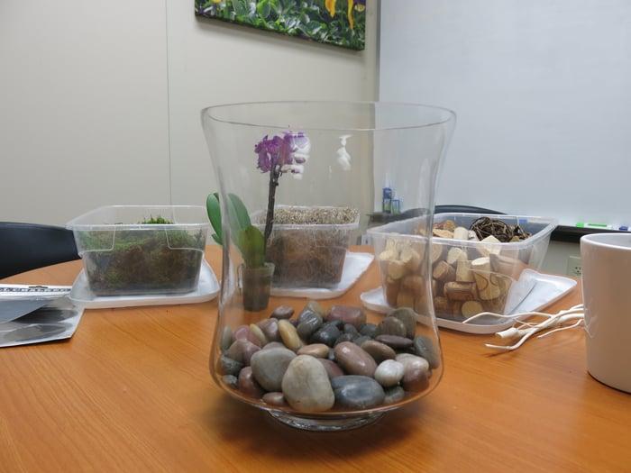 DIY orchid terrarium rocks
