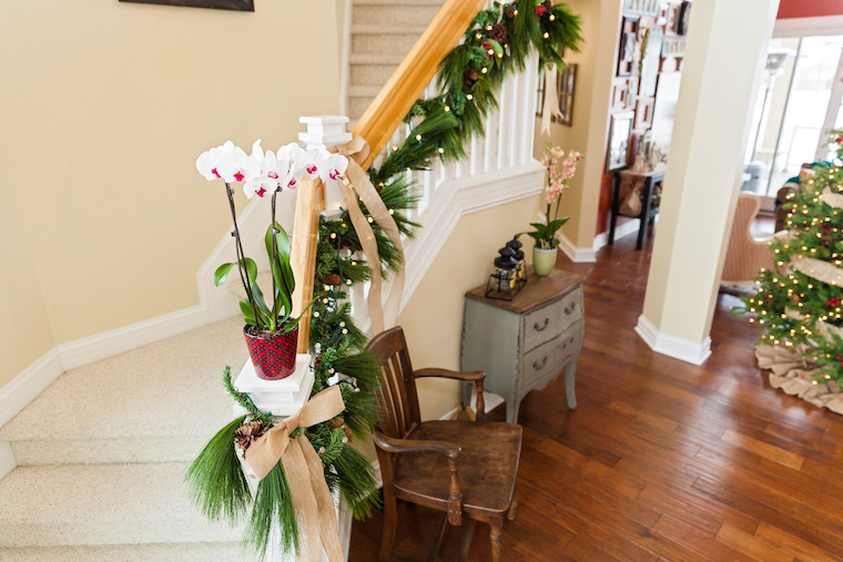 Decorative-plants-pot