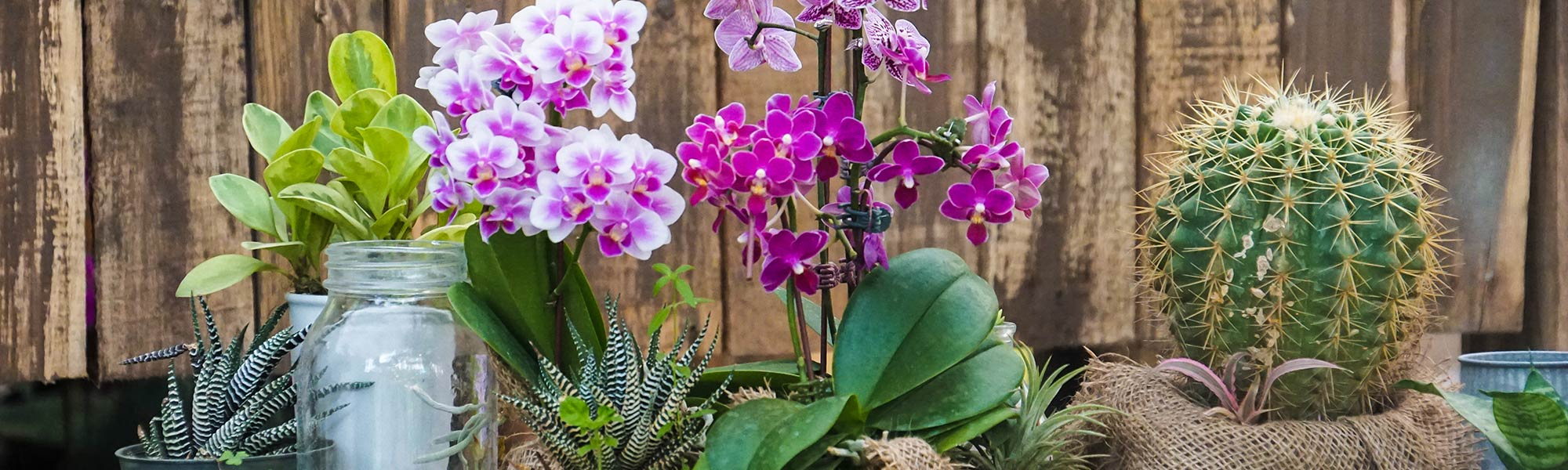 Orchid and Cactus