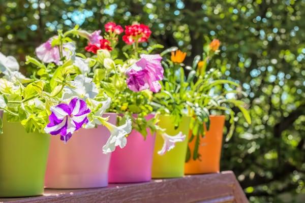 plant-pots