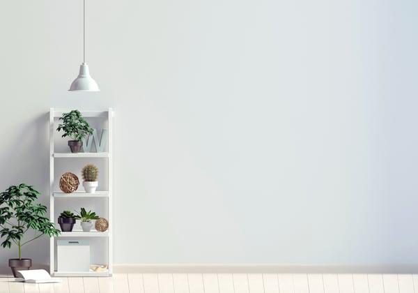 plants-on-shelf
