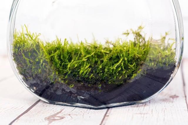 JAI Blog Top 5 Best Plants To Put In a Terrarium