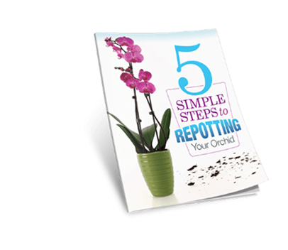 Repotting-Your-Orchid