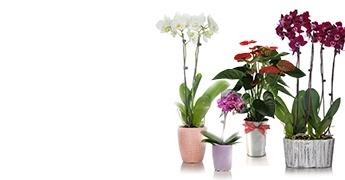 Explore Plants