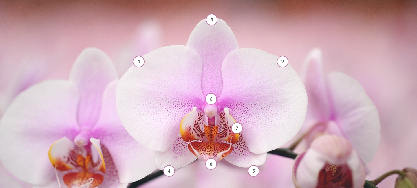 Points on an orchid