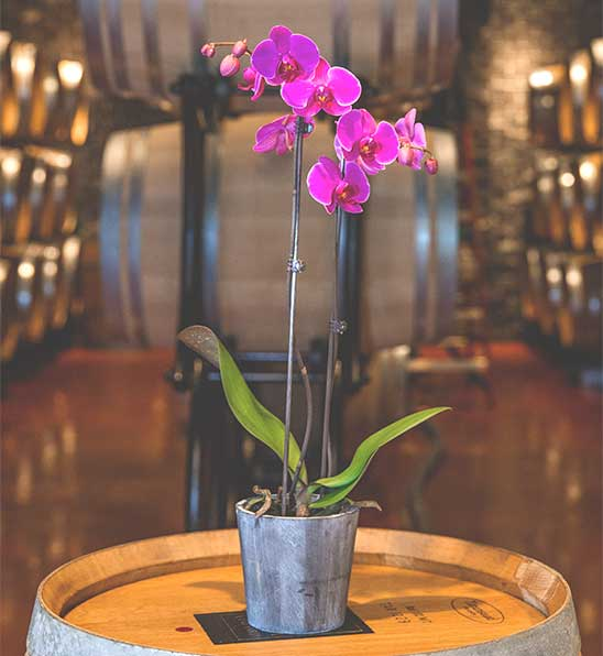 Orchid sitting on a barrel