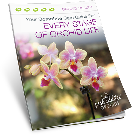 Your Complete Care Guide for Every Stage of Orchid Life