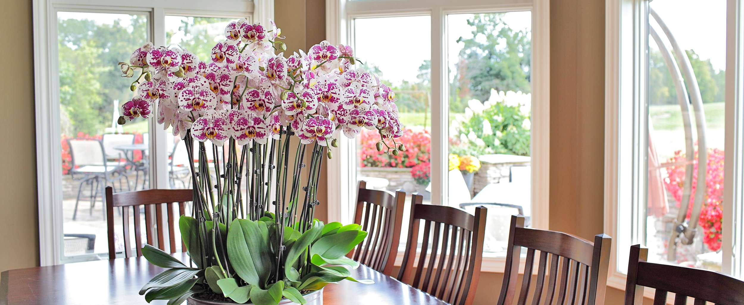 Orchid sitting on table