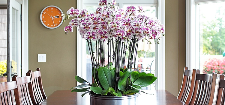 Orchids on table
