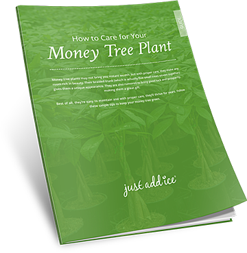 Money Tree Care Guide