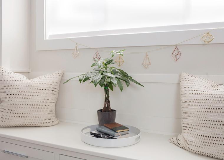 Money-Tree-Plant4