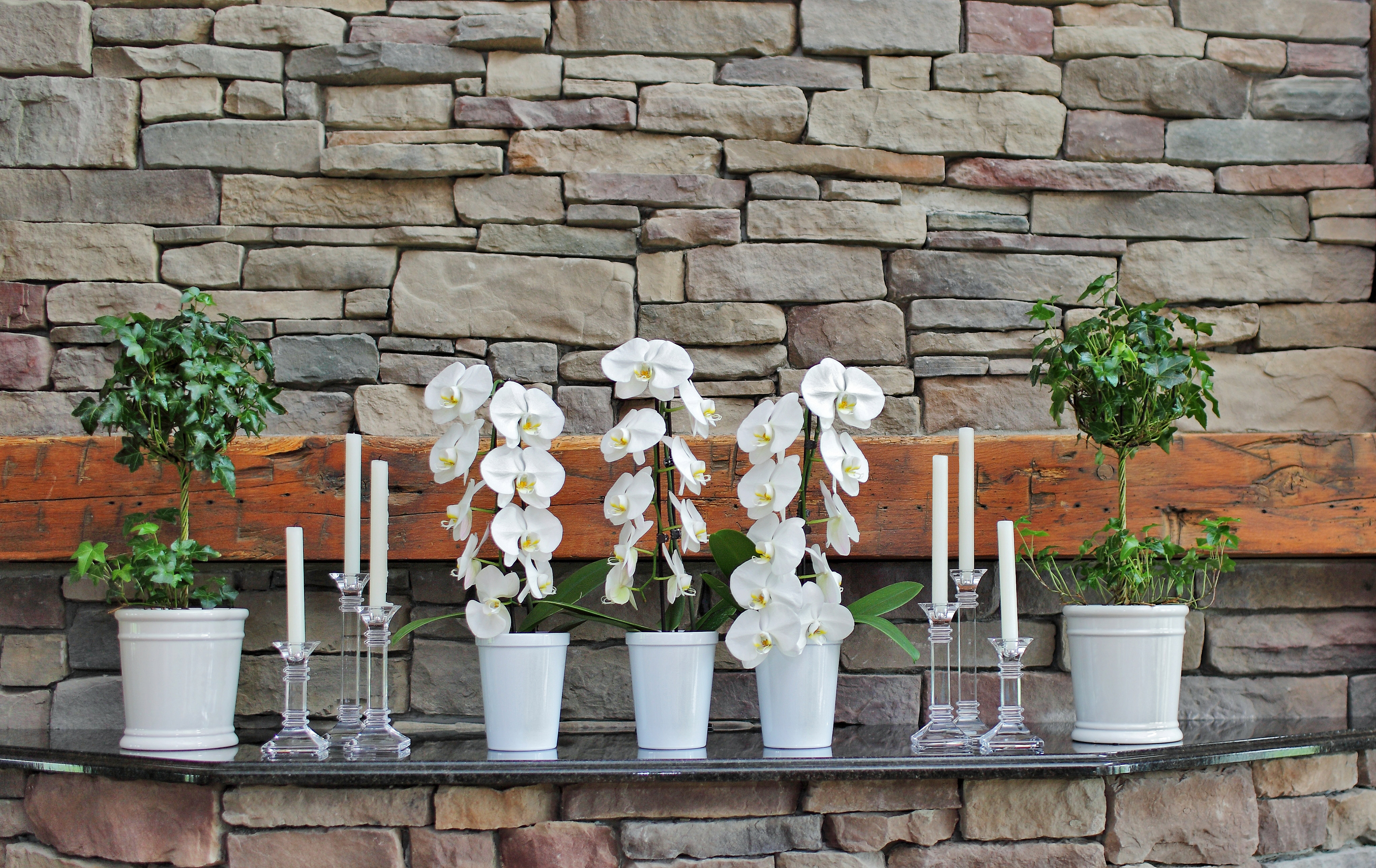 waterfall orchid special occasion