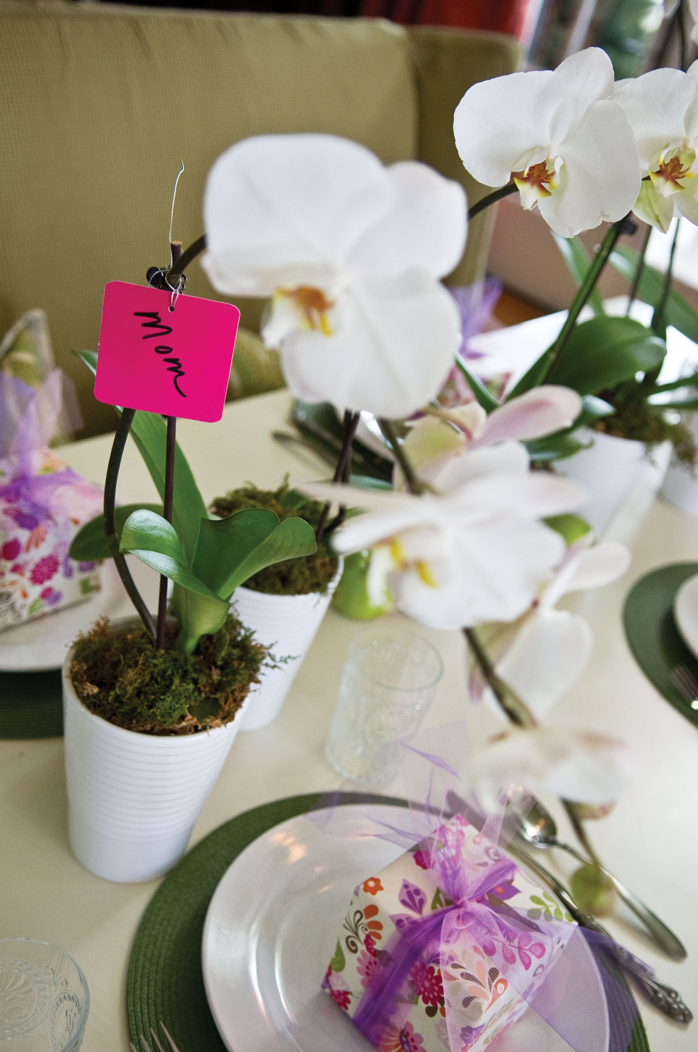 5 inch orchid mother's day gift