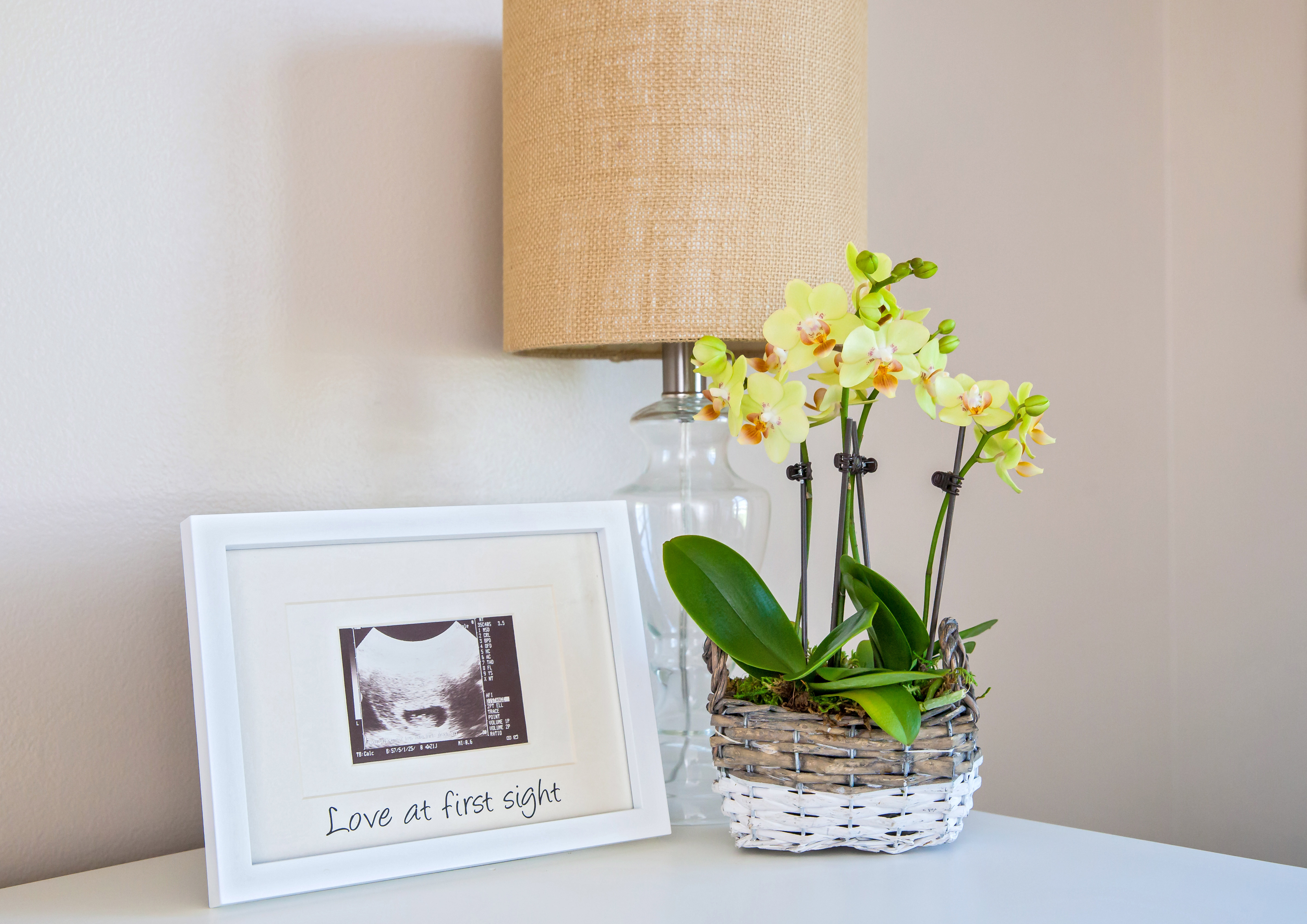 mini orchid new baby