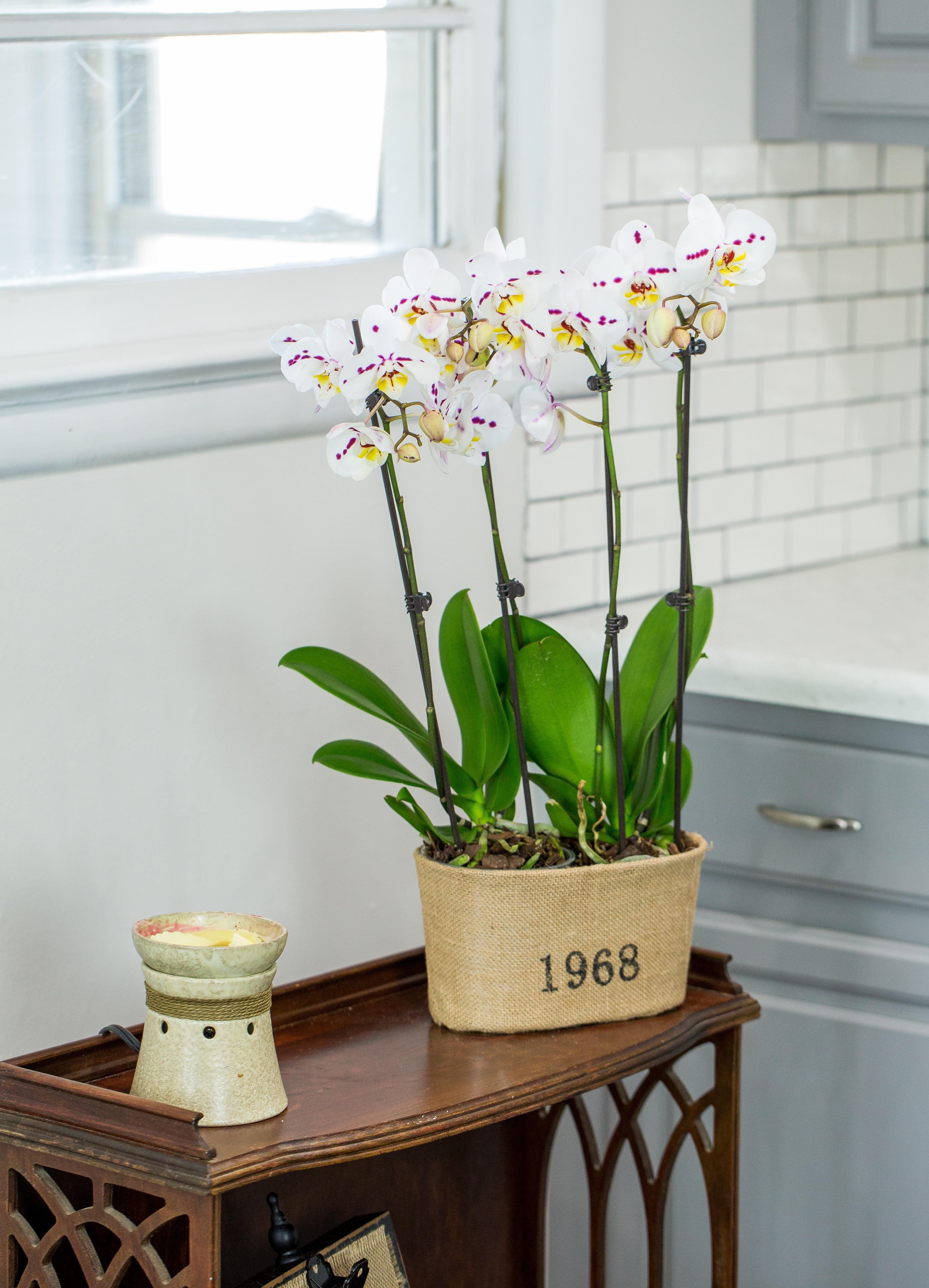 Orchid Centerpiece