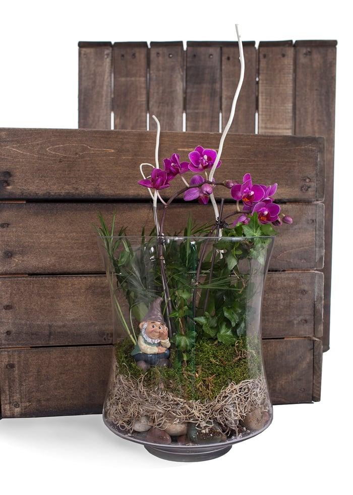 Orchid terrarium gnome