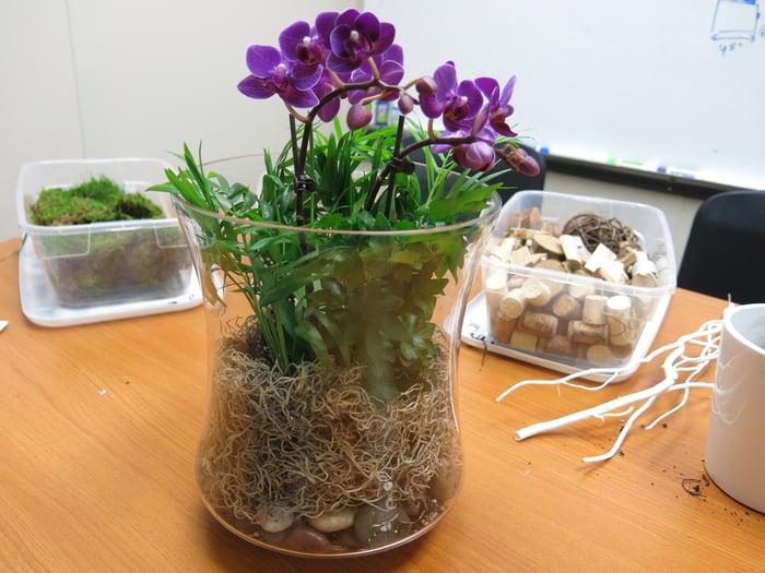 Orchid terrarium moss