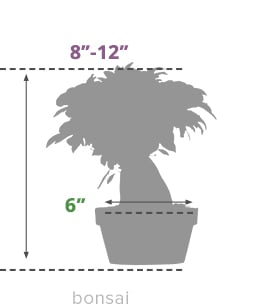 Size Guide Bonsai