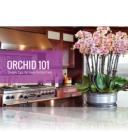 Orchid 101 Simple Tips for Easy Orchid Care