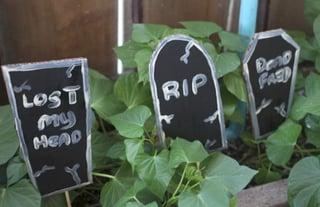 Bonsai-tree-graves.jpg