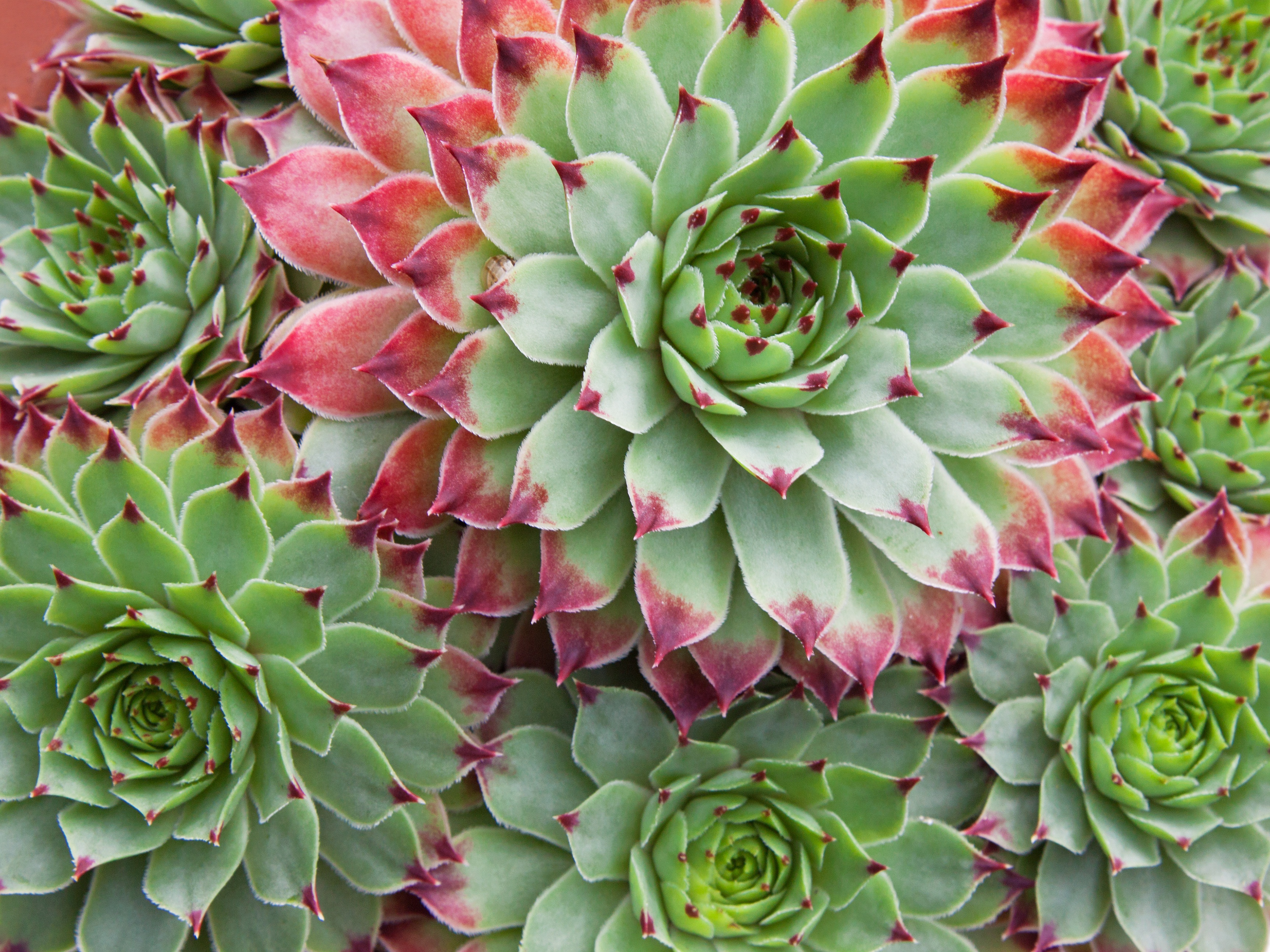 8 Plants To Inspire Workplace Productivity