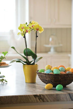 Easter_Gifts_Orchid_10