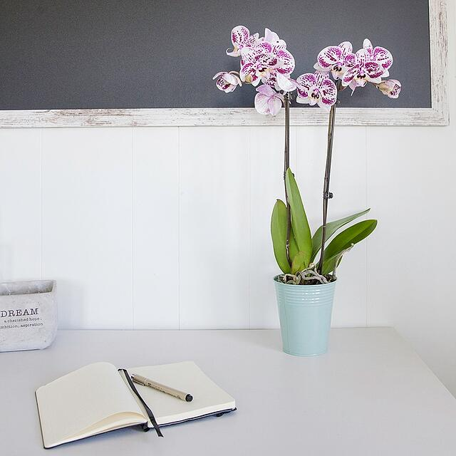 This Is Why Watering Orchids With Ice Cubes Is Better