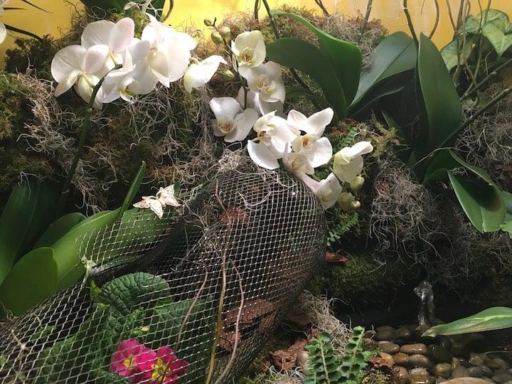Orchid-Mania-Secret-Garden.jpeg