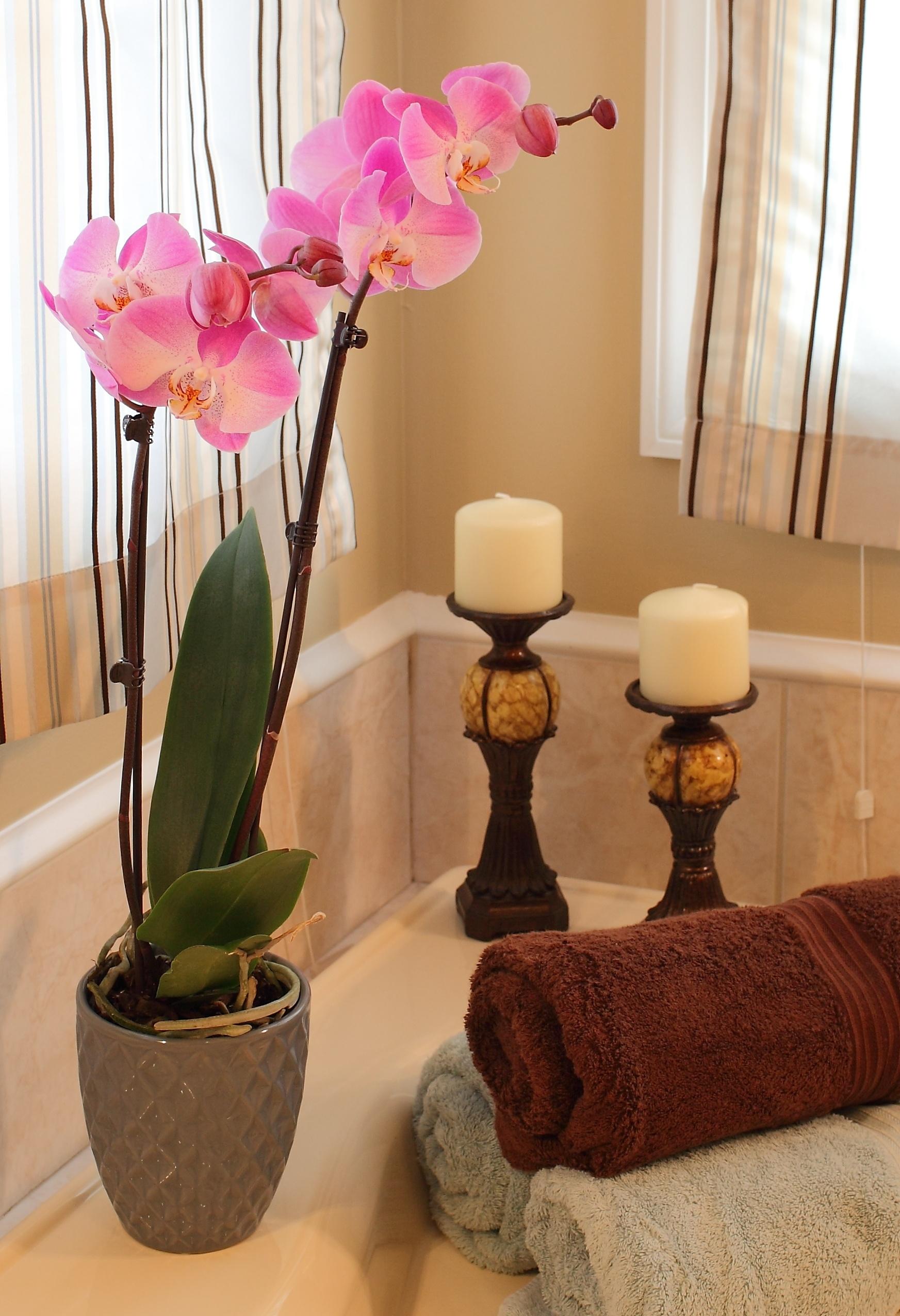 Phalaenopsis-orchids4.jpg