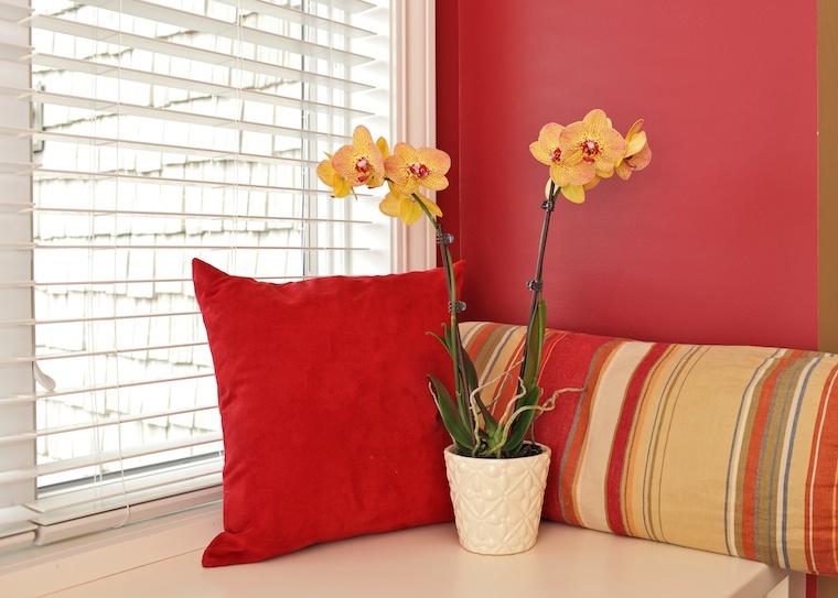 Phalaenopsis-orchids5.jpg