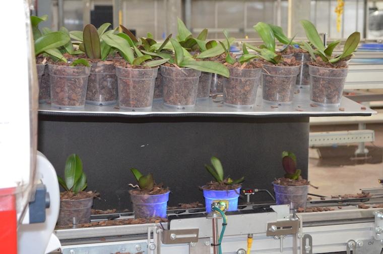 greenhouse-robot-scanner (1)