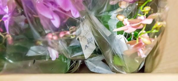 buy-orchids-online
