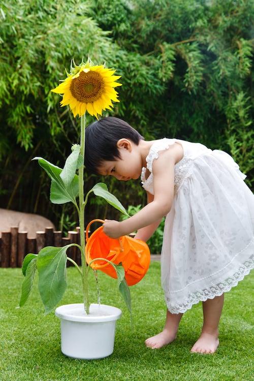 child-planting-sunflower