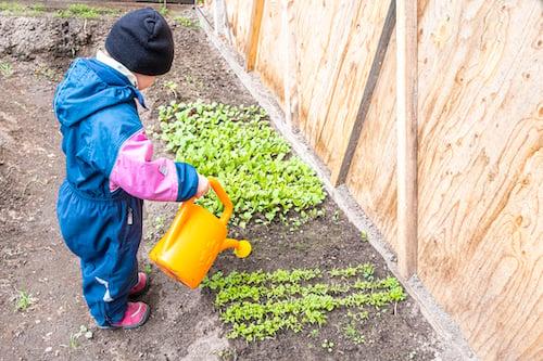 child-watering-herbs