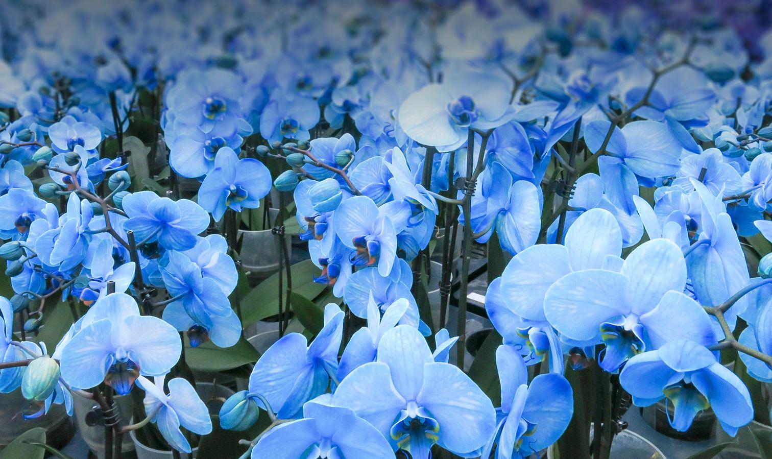coloroption-watercolor-blue-new