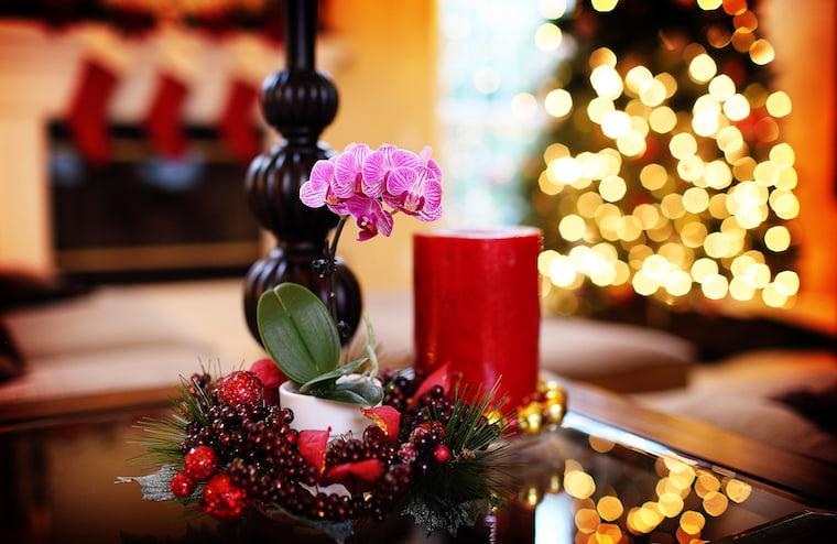 decorative-plants-berries