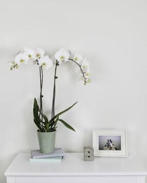 floral-department