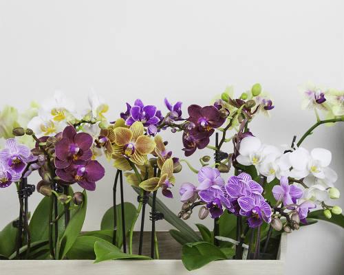 floral_department