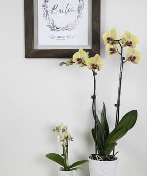 floral_department-1