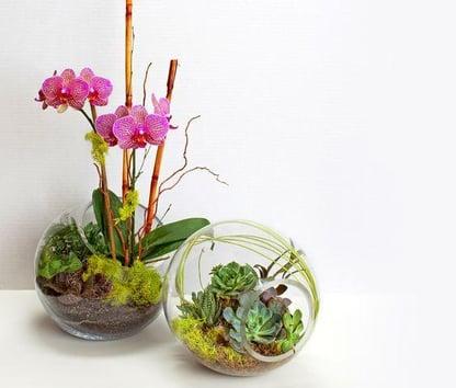 orchid arrangements as an orchid terrarium